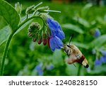 beautiful insects on flowers... | Shutterstock . vector #1240828150