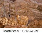 namibe angola   03nov2018   men ... | Shutterstock . vector #1240869229