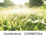 nature background with drops of ... | Shutterstock . vector #1240887016