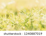 nature background with drops of ... | Shutterstock . vector #1240887019