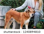Stock photo beautiful girl with his shetland sheepdog dog sitting and posing in front of camera on wooden bench 1240894810