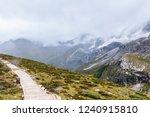 close views of the yangmaiyong... | Shutterstock . vector #1240915810