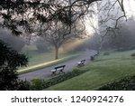 foggy morning in the park | Shutterstock . vector #1240924276