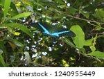 macro closeup. colorful exotic... | Shutterstock . vector #1240955449
