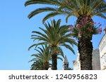 palm tree in bloom | Shutterstock . vector #1240956823