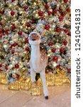 reindeer and christmas... | Shutterstock . vector #1241041813