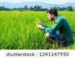 squatting man analyse wheat on... | Shutterstock . vector #1241147950