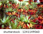 beautiful colorful orange... | Shutterstock . vector #1241149060