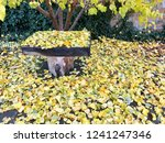 autumn comes to our yard | Shutterstock . vector #1241247346