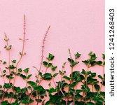 plants on pink creative concept....   Shutterstock . vector #1241268403
