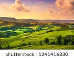 langhe vineyards sunset... | Shutterstock . vector #1241416330