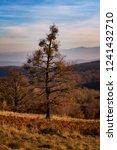 autumn landscape scene | Shutterstock . vector #1241432710