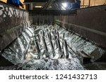 galvanizing metallic structures ... | Shutterstock . vector #1241432713