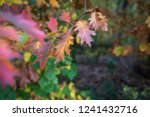 colorful autumn leaves | Shutterstock . vector #1241432716