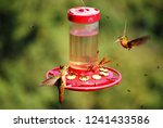 perfect shot of colibri at mid... | Shutterstock . vector #1241433586
