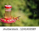 perfect shot of colibri at mid... | Shutterstock . vector #1241433589