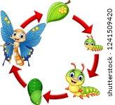illustration of butterfly life...   Shutterstock . vector #1241509420