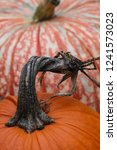 Twisted Pumpkin Stem Closeup