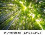 beautiful landscape of bamboo... | Shutterstock . vector #1241623426