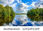 forest river reflection... | Shutterstock . vector #1241691169