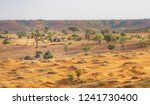 Desert Of Niger  Niamey. Trees...