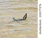 wild water monitor  varanus...   Shutterstock . vector #124177276