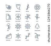 rowan  sakura  sisyrinchium ... | Shutterstock .eps vector #1241866270