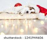 sleeping dog in christmas hat | Shutterstock . vector #1241944606