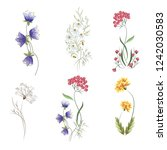 wildflowers. a set of graphic... | Shutterstock .eps vector #1242030583