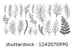 hand drawn vector illustrations.... | Shutterstock .eps vector #1242070990