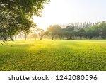 beautiful green gass field in...   Shutterstock . vector #1242080596