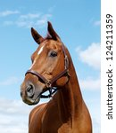 Stock photo a head shot of a chestnut horse against the sky 124211359