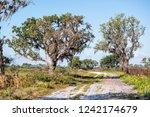 Prairie Landscape With Oak...