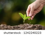 hand of a farmer giving... | Shutterstock . vector #1242240223