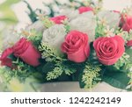 bouquet of red and white... | Shutterstock . vector #1242242149
