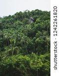 landscape view of zip line... | Shutterstock . vector #1242261820