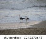 Pair Of Seagulls On The Beach