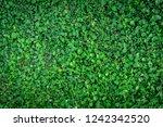 beautiful green leaves floor of ... | Shutterstock . vector #1242342520