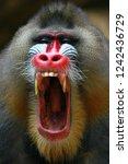 Monkey Mandril Open Mouth ...