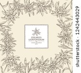 background with edelweiss ... | Shutterstock .eps vector #1242443029