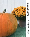 pumpkin and mum autumn display | Shutterstock . vector #1242517873