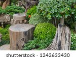 hardwood stump seat in garden | Shutterstock . vector #1242633430