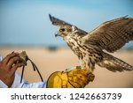 Festival Of To Hunt With Hawks...