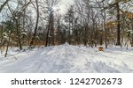 in winter forest at sunny day. | Shutterstock . vector #1242702673