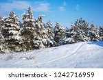 majestic white spruces  covered ... | Shutterstock . vector #1242716959