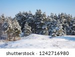 majestic white spruces  covered ... | Shutterstock . vector #1242716980