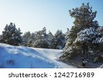 majestic white spruces  covered ... | Shutterstock . vector #1242716989