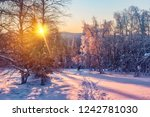 dawn in the winter in the... | Shutterstock . vector #1242781030
