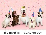 Stock photo group of puppies celebrating a new year 1242788989