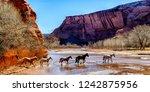 Free Range Horses  Canyon De...